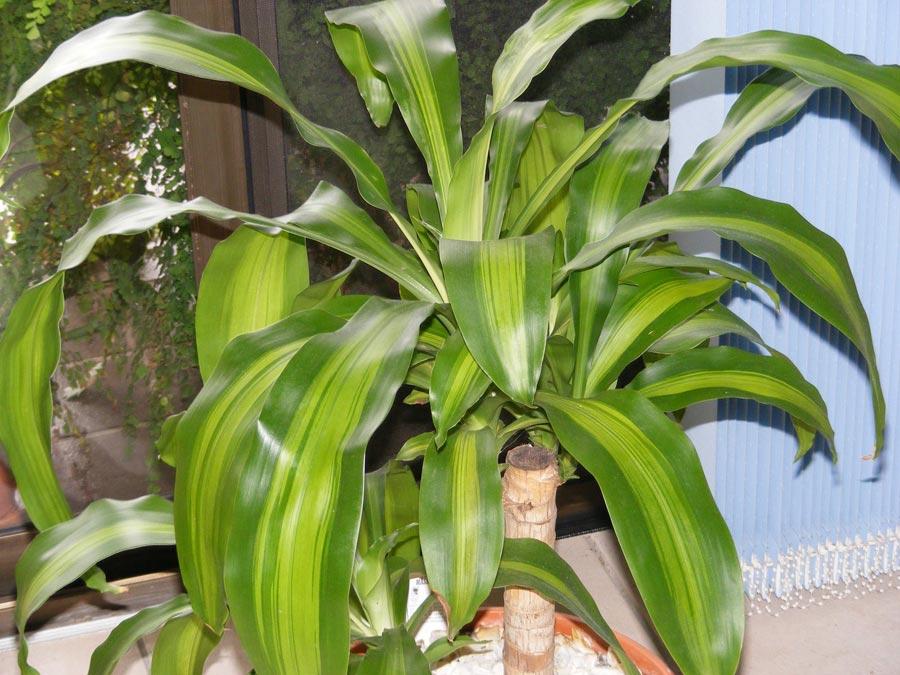 Plantas de interior tipos cuidados y fotos plantas del for Plantas de interior fotos y nombres