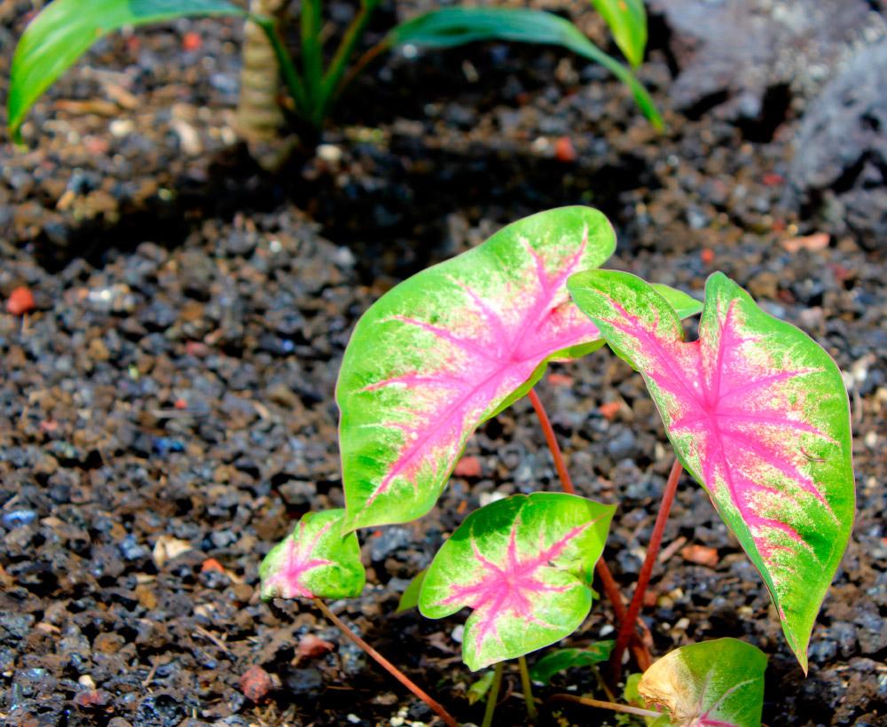 Cuidados para plantas tropicales de interior - Macetas para plantas de interior ...