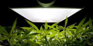 Balastros para el cultivo de marihuana