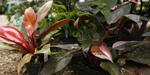 Cuidados de plantas de interior