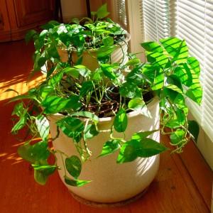 Beneficios de tener plantas de interior