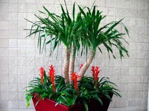 Plantas de interior tropicales