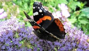 Plantas que atraen mariposas