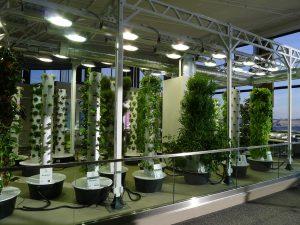 Tipos de bombillas para el cultivo interior de plantas
