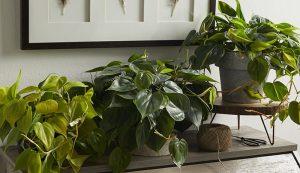 Tipos de fertilizantes para plantas de interior